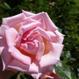 rose great expectations
