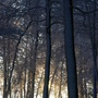 Woods in wintertime