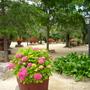 Rocky garden