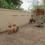 Vertical Garden Space
