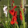 Flowers_2012_001