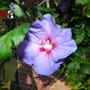 Flowers_2012_010