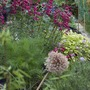 flower bed with penstemon