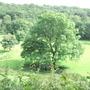 tree in carmarthenshire