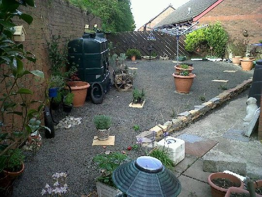 Garden so far