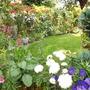Side garden 2012