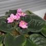 blooming at last! july 2012