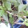 Flowers_julio_28_2012_005