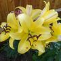love my lilies :)