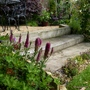 Pink Veronica by the steps (Veronica spicata (Aehriger Ehrenpreis))