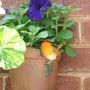 Robin wall pot with Petunia