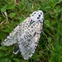 Loepard Moth