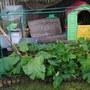 Veg Patch July 2012 - 01