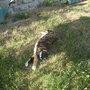 Feline garden-lover, part 2