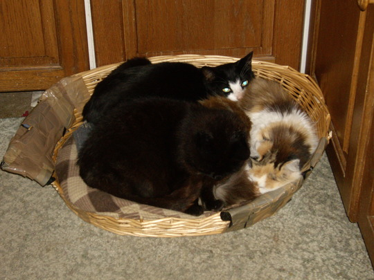 A Basket Full of Cats!