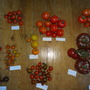 tomatoes Moruno, Sweet Million, Orkado, Premio, Ailsa Craig, Sungold, Jaune Flammée, Black Russian, Sugardrop, 'Heston Blumenthal', 'Borough Market'- 270712