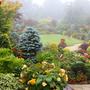 Upper garden in mist 21 July 2012