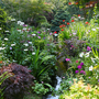 Lower garden stream 30 July 2012