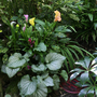 Jungle plants 30 July 2012