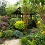 Middle garden jungle