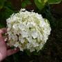 Flowers_2012_009