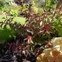 For my records... (Eremophila maculata (Native Fuchsia))