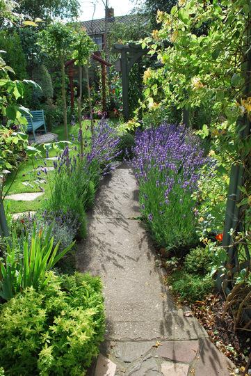 Lavender path... (lavandula angustifolia)