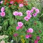 Garden_3158