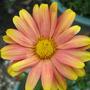 Garden_3159