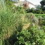 Zahrada_020