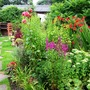 Looking towards the cottage - front edge of middle border