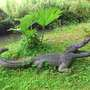 Croc full length