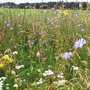 Airfield of wild flowers