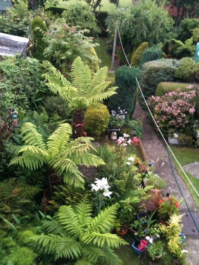 tree ferns and many clipped plants (treeferns)