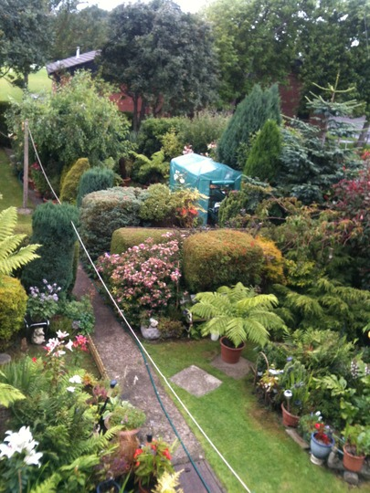 treeferns conifers and other border plants