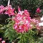 Garden_05thaug2012_012