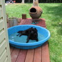 Matilda in swimming pool