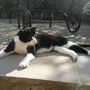 Felix the cat enjoying a bit of sunshine