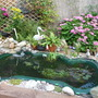 My New Pond