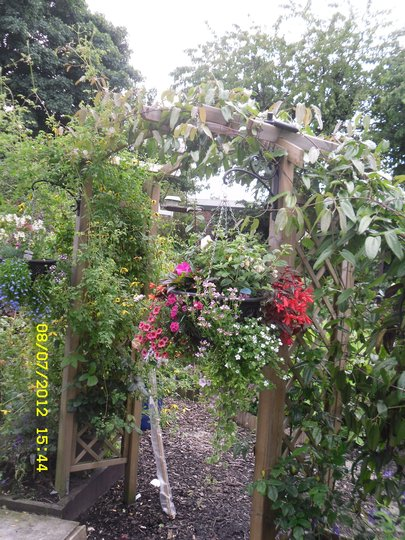 Update on Rose Arch from last year s pictue