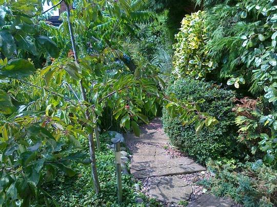 upper woodland walk