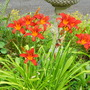 Small_orange_day_lilies