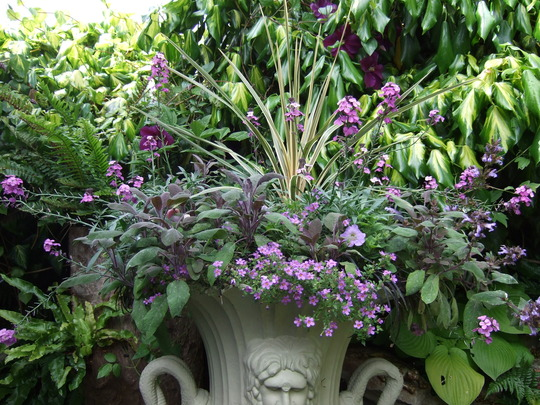A beautifully planted urn.