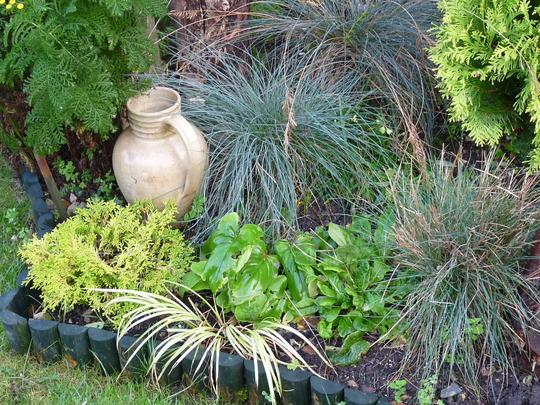 Grass garden (Festuca glauca (Blue fescue))