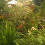 aurgust garden