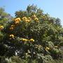 Balboa_park_08_21_12_4_