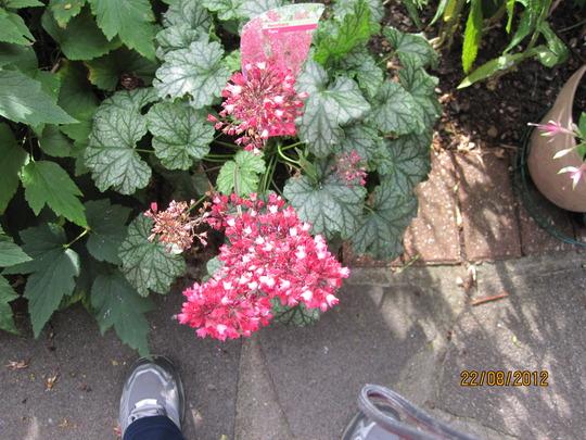 H.Paris in bloom in August