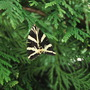 Jersey Tiger (Euplagia quadripunctaria)! seen 23/8/12!