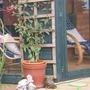 Fuchsia (climbing) (Fuchsia magellanica (Hardy fuchsia))