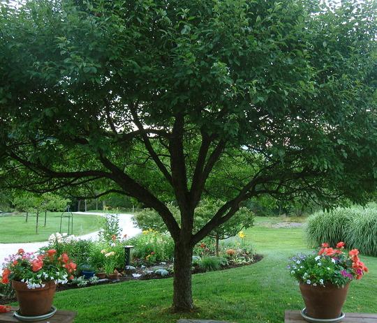 small garden view--August 15 2012